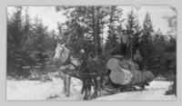 Laurence Pehota and Charlie hauling logs by sleigh