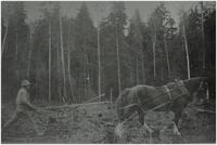 Andy Rauma clearing land with a horse