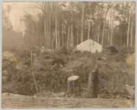 Walter Verity's tent house at Trout Creek