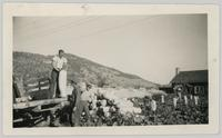 Bob Bleasdale and Alf McLachlan unloading zucca melons